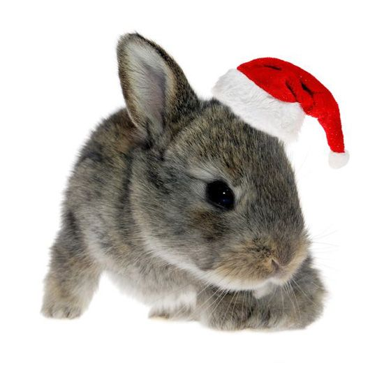 Fotografía - 5 Cruelty Free Holiday Gift Ideas