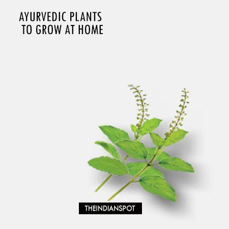 Fotografía - Plantas ayurvédicas para crecer en casa