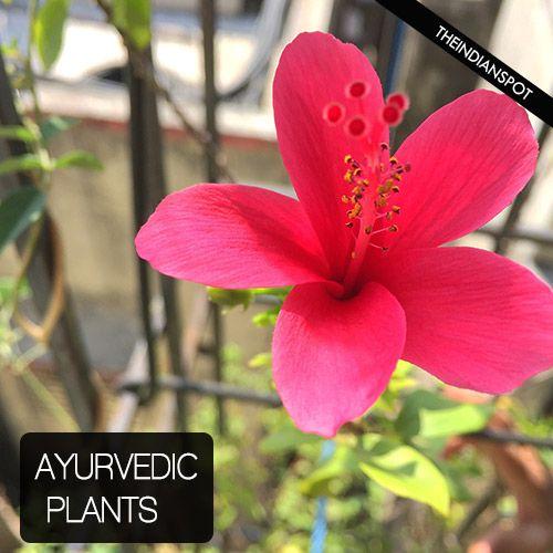 Fotografía - Plantas y hierbas ayurvédicas importantes