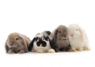 Fotografía - Saltando Decisión de Bunny aplaude la UE para la Prohibición de Pruebas con animales de los productos cosméticos