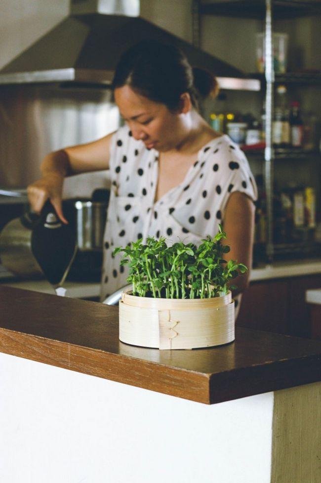 Fotografía - Aprenda // Cómo a brotar Microgreens en casa
