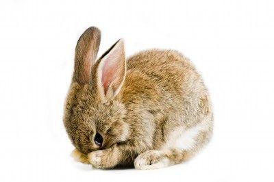 Fotografía - Mitos sobre los ensayos con animales